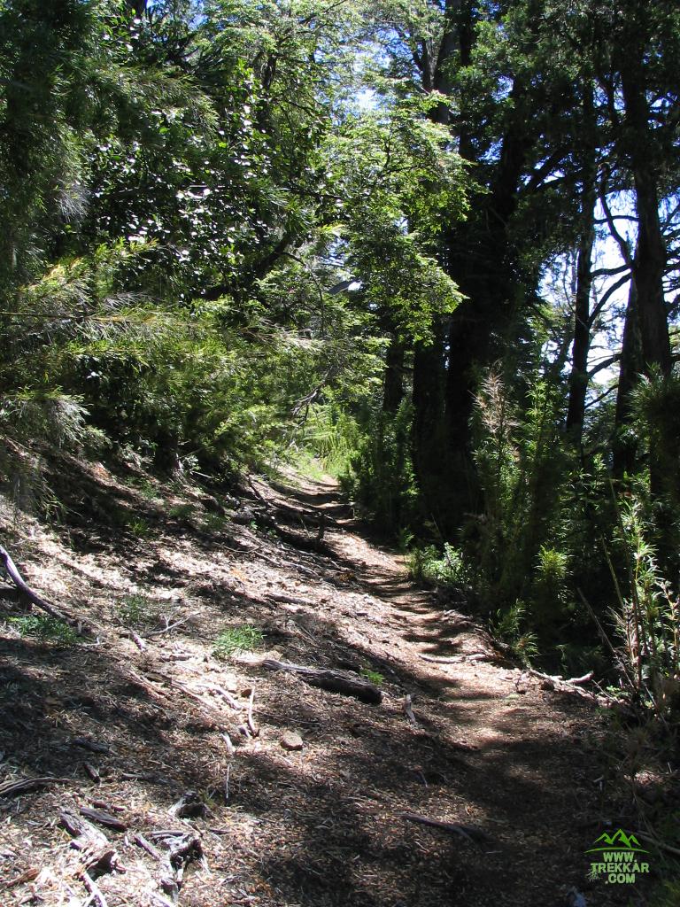 Sendero que bordea el Ñorquinco hacia cascada Coloco