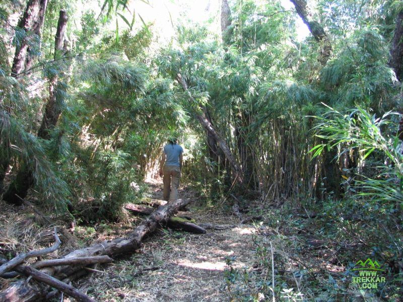 IMG_6868 - el sendero se va cerrando antes de llegar a la laguna Escondida