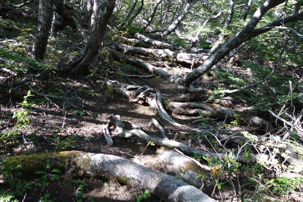el primer bosque que encontramos es de ñires
